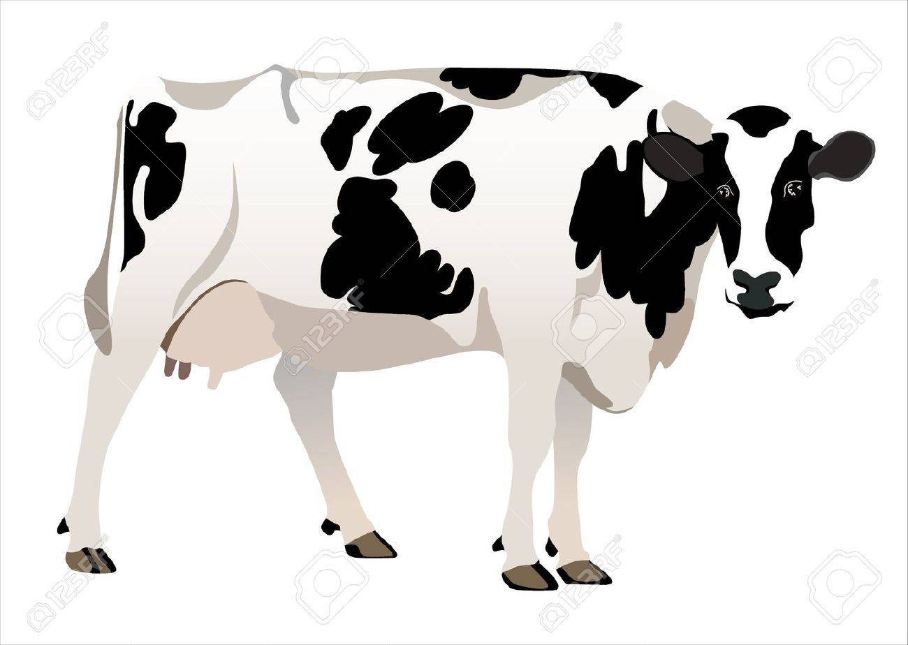 cow isolated on a white background Stock Vector - 17751921