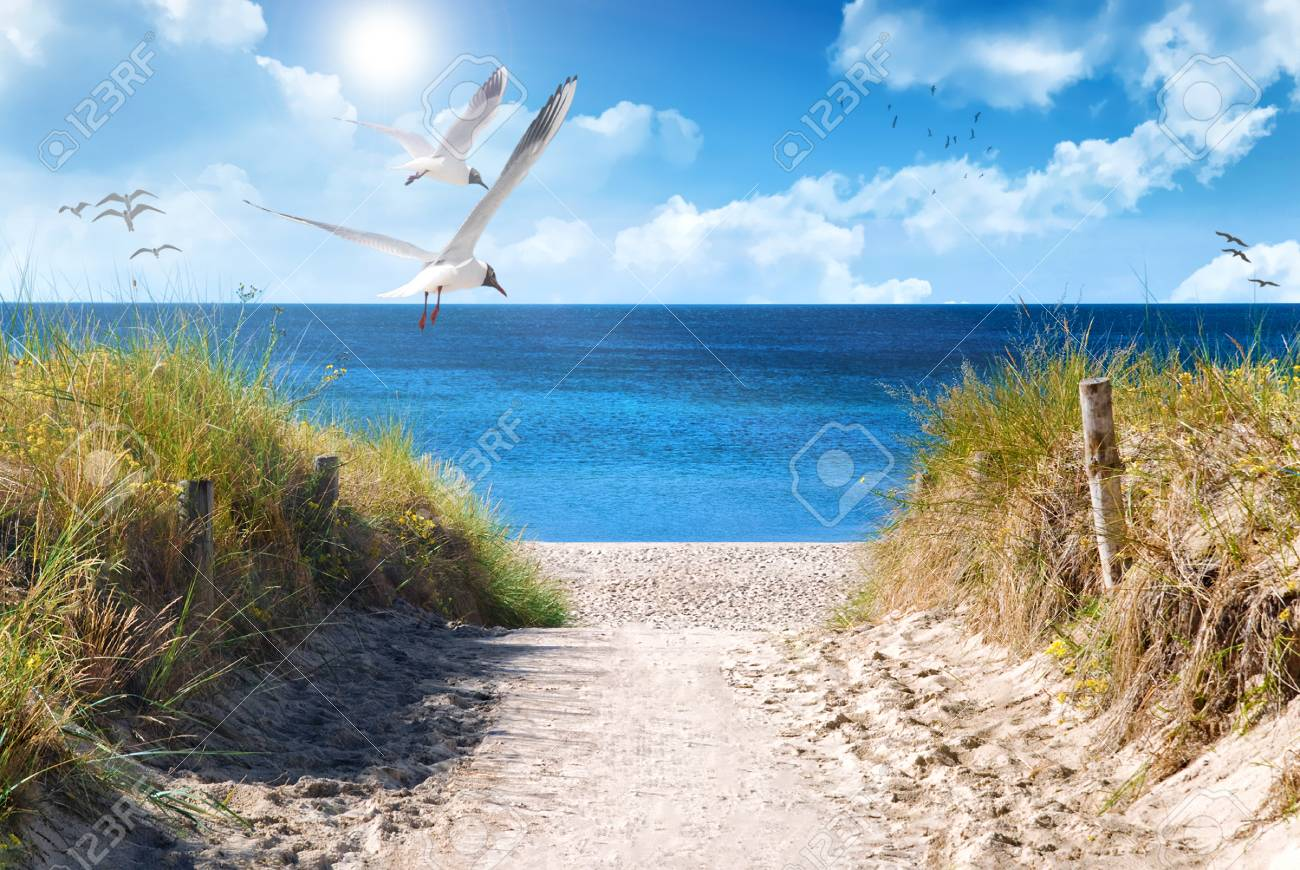 the baltic coast of germany in the summer - 89403031