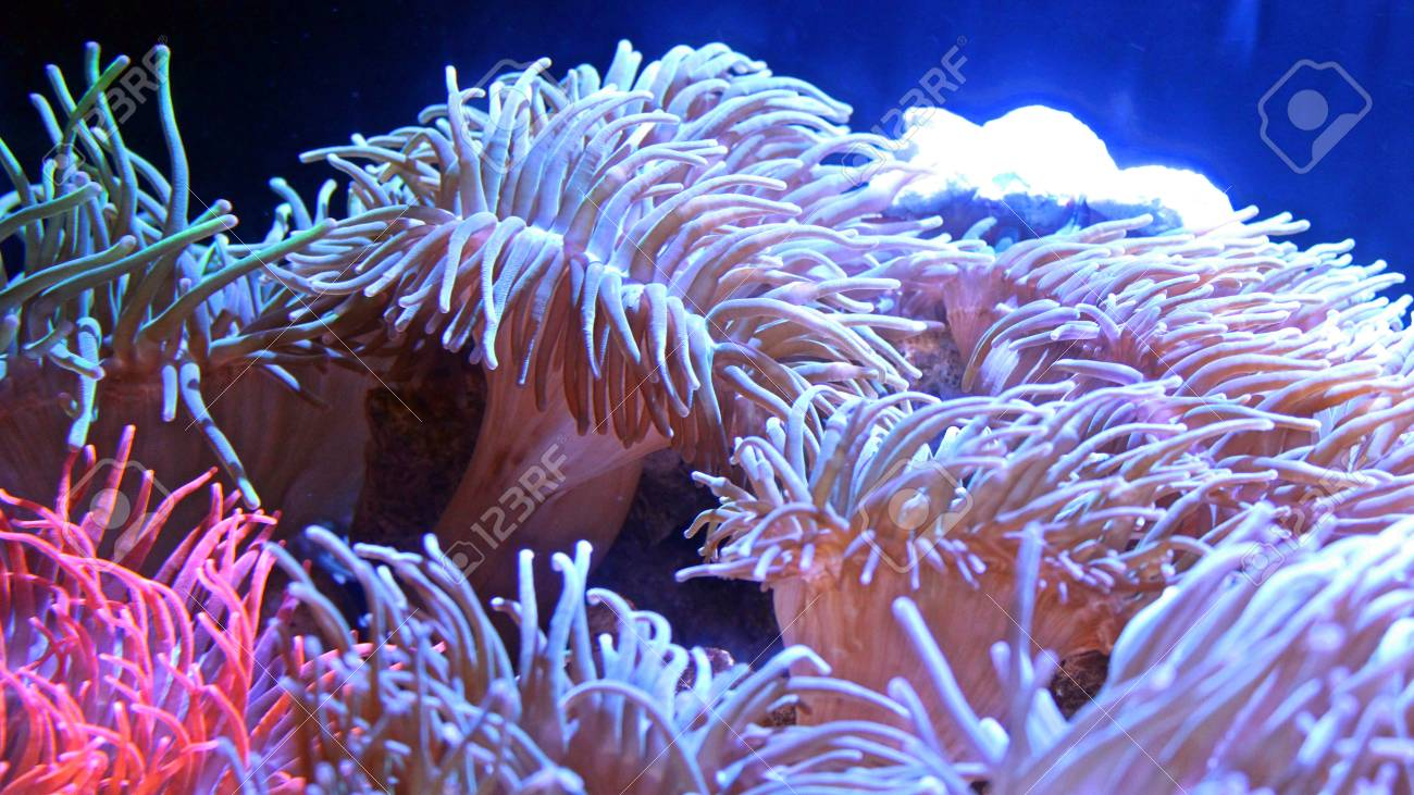 Glowing Deep Sea Natural Coral Reef Background Wallpaper Stock Photo