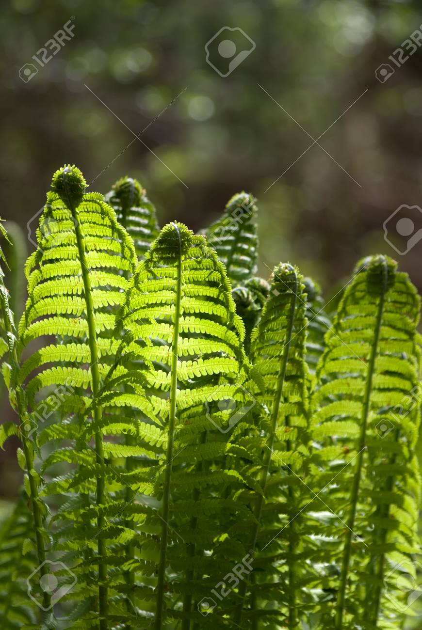 The fern leaves on the sunlight glares background Stock Photo - 6161257