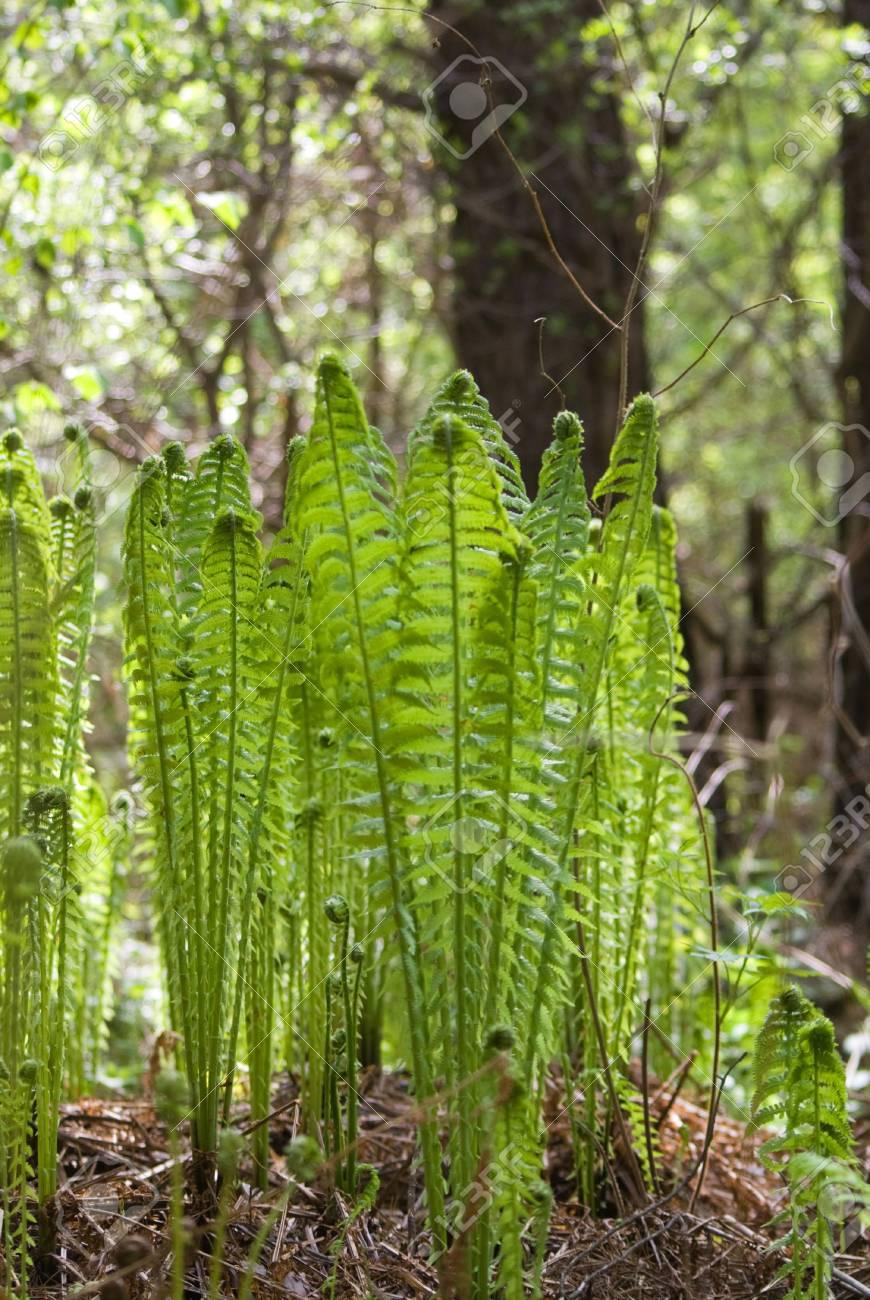 The ferns on the sunlight glares background Stock Photo - 7989216