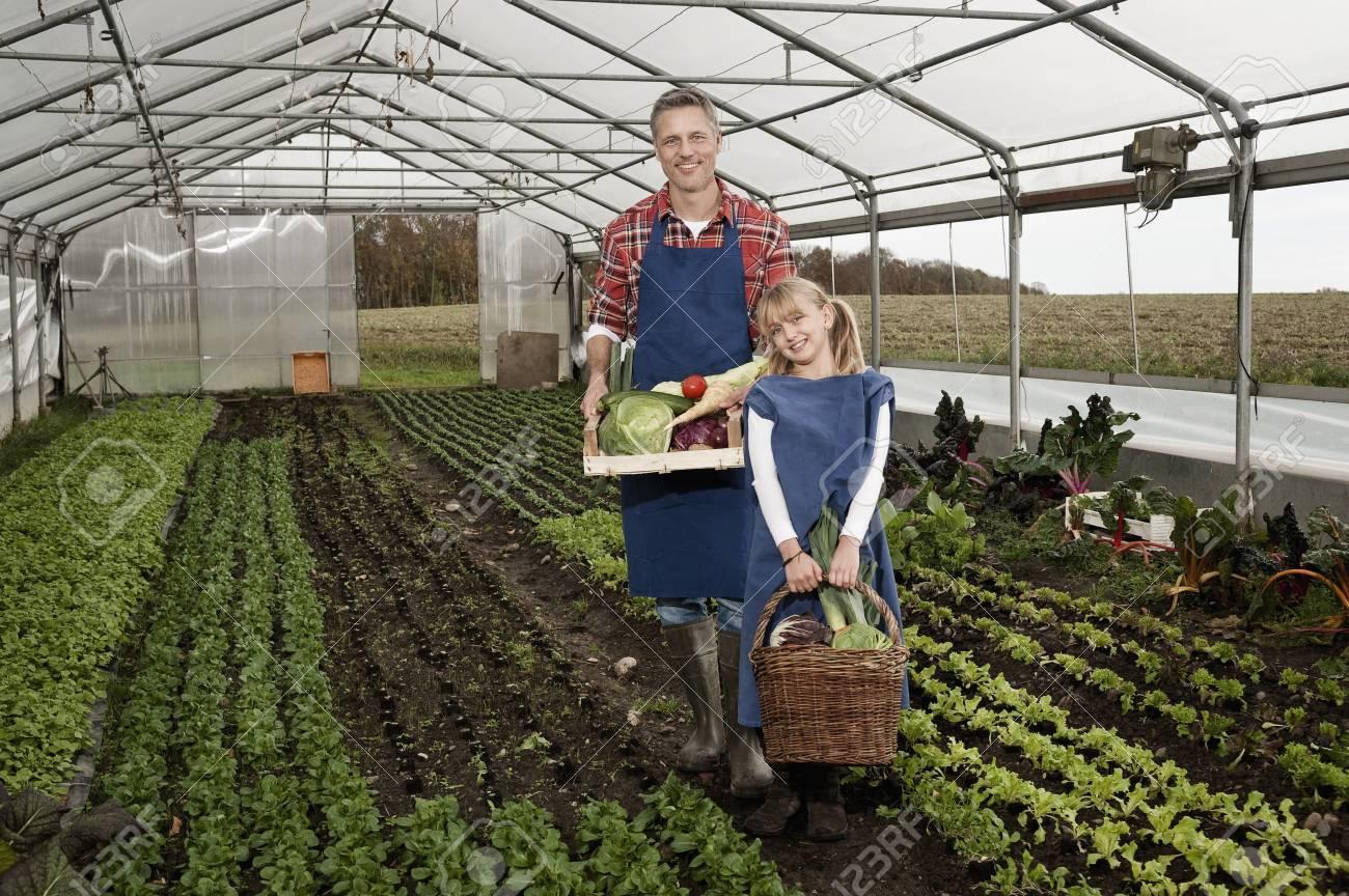 Vater Und Tochter Ernten Gemuse Im Gewachshaus Lizenzfreie Fotos