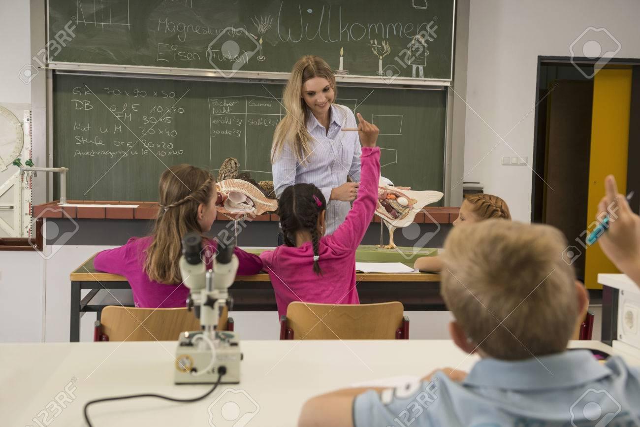 Weibliche Lehrerin Erklärt Das Organ Des Anatomie-Modells An ...