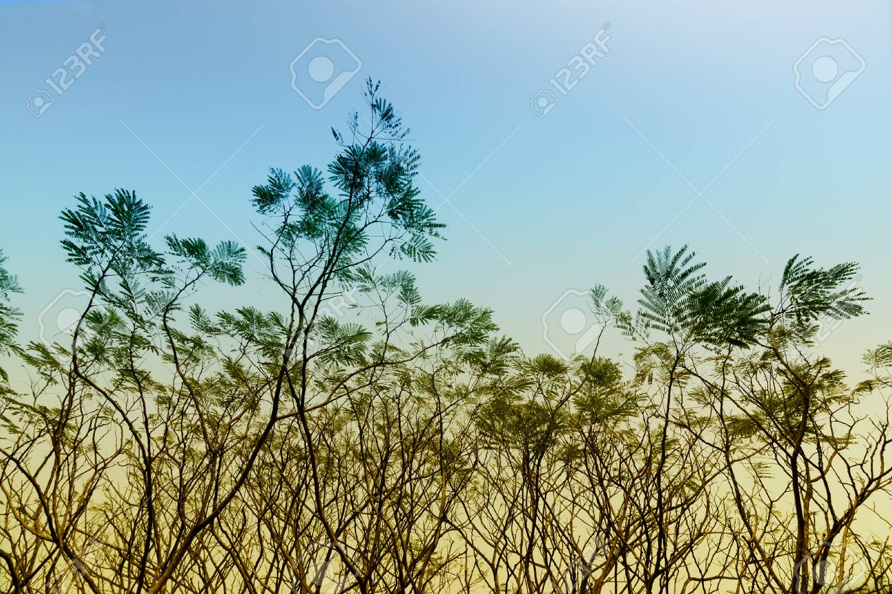 Leafless tree branches of winter season, season specific image