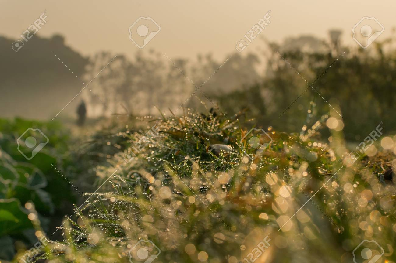Dew on grass, natural stock image with copy space - winter season