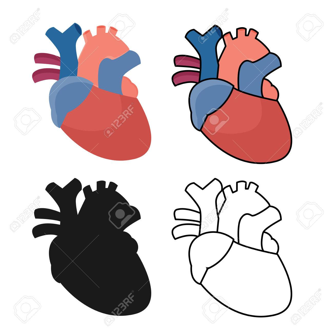 Anatomical Heart Flat Graphic Royalty Free Cliparts Vectors And