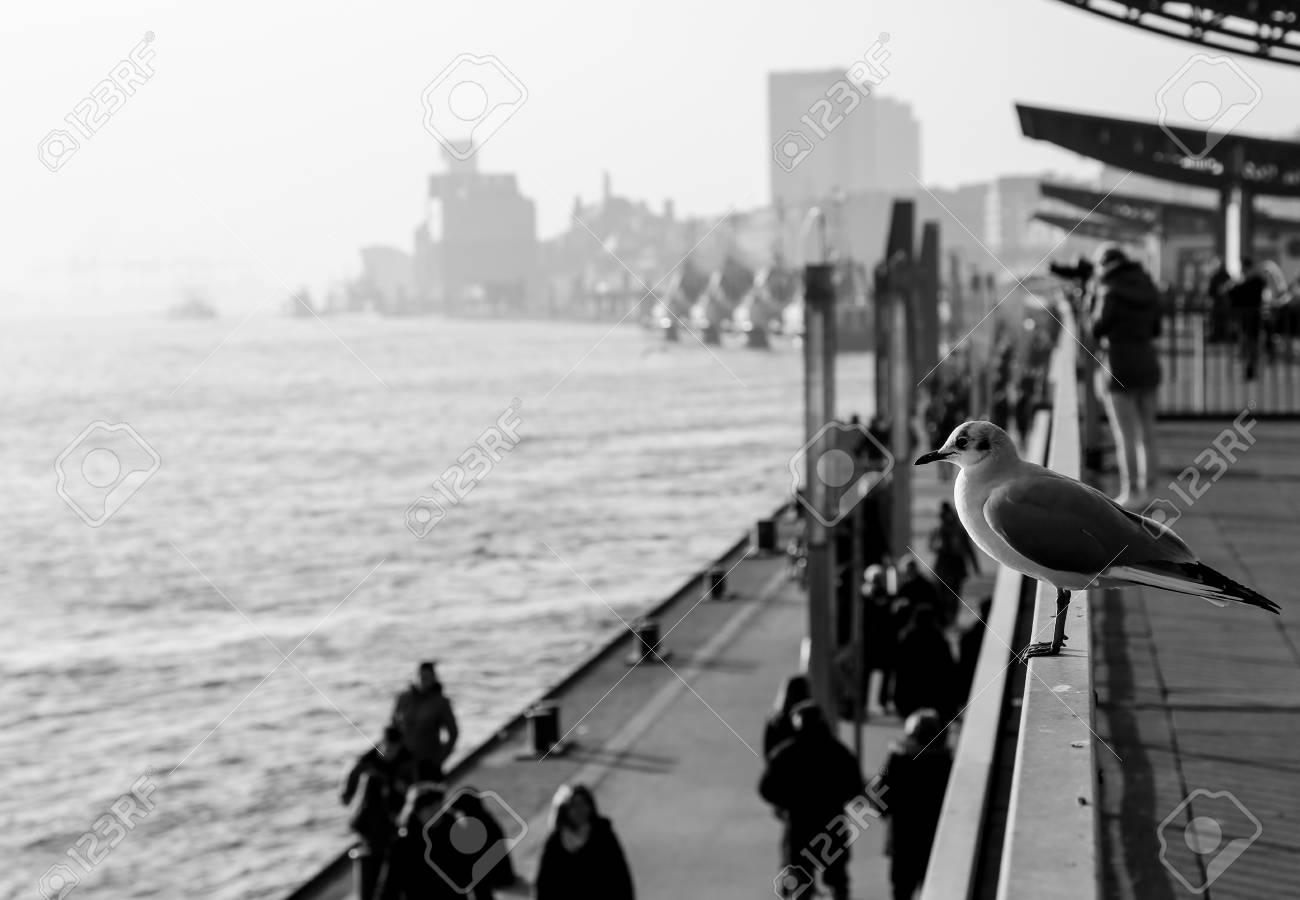 Promenade Im Hafen Von Hamburg Mit Einer Möwe Auf Einem Geländer