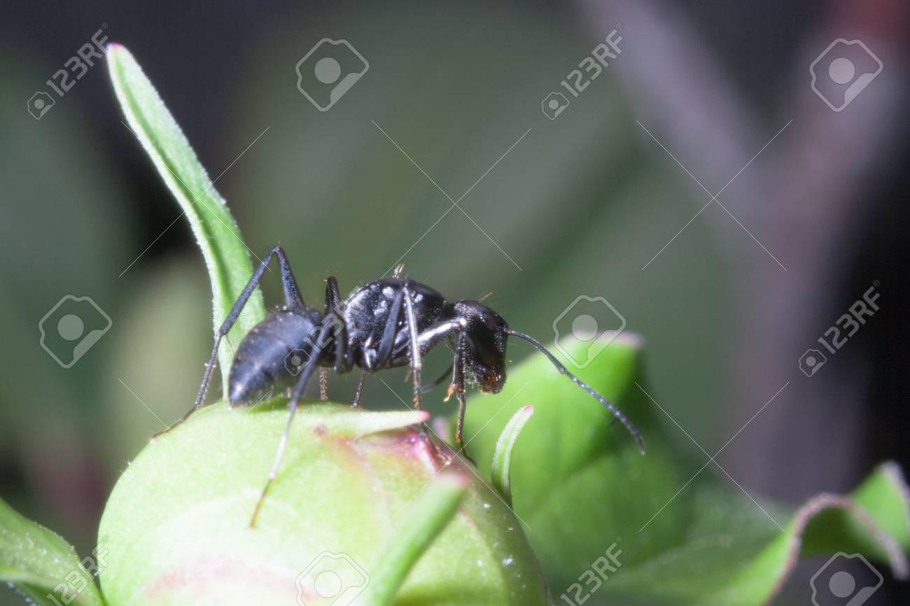 Los Detalles De Las Hormigas En El Jardín De Flores Fotos, Retratos ...