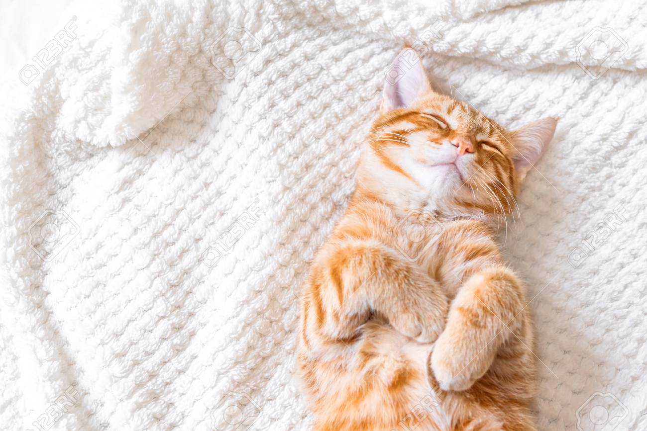 Ginger Cat Sleeping On Soft White Blanket, Cozy Home And Relax.. Stock  Photo, Picture And Royalty Free Image. Image 116504706.