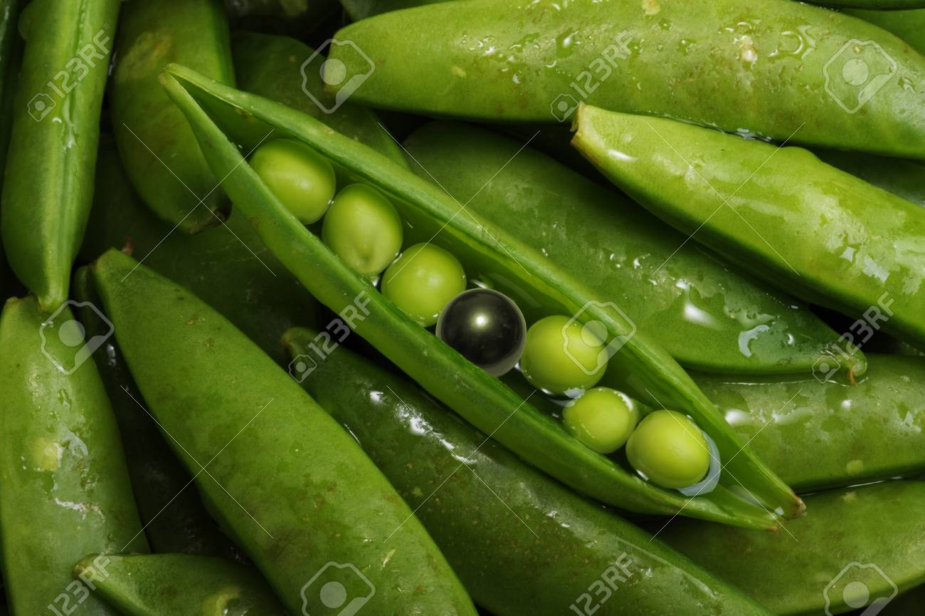 Black Tahitian Pearl in Green Split Pea Pod. Stock Photo - 9345268