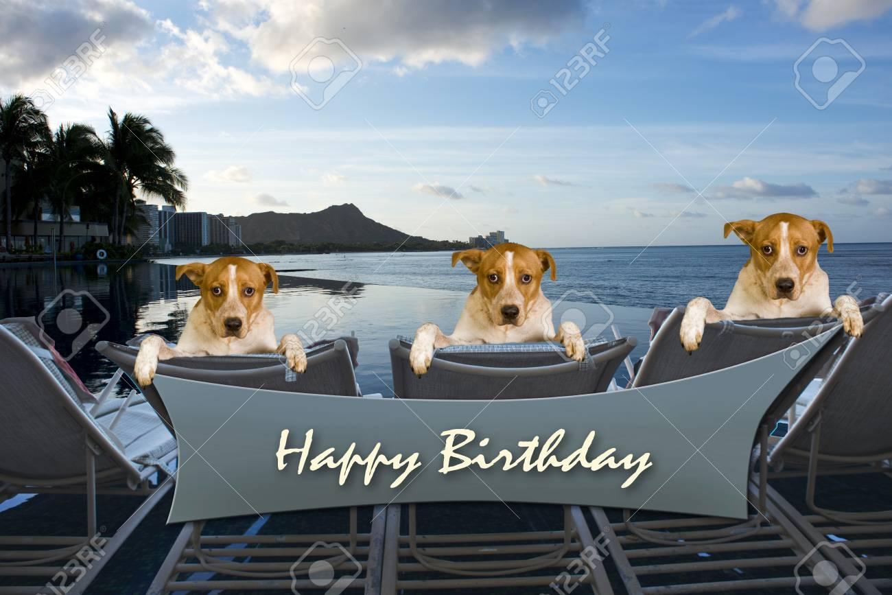 Three Family Dogs On Vacation In Hawaii Say Happy Birthday Stock