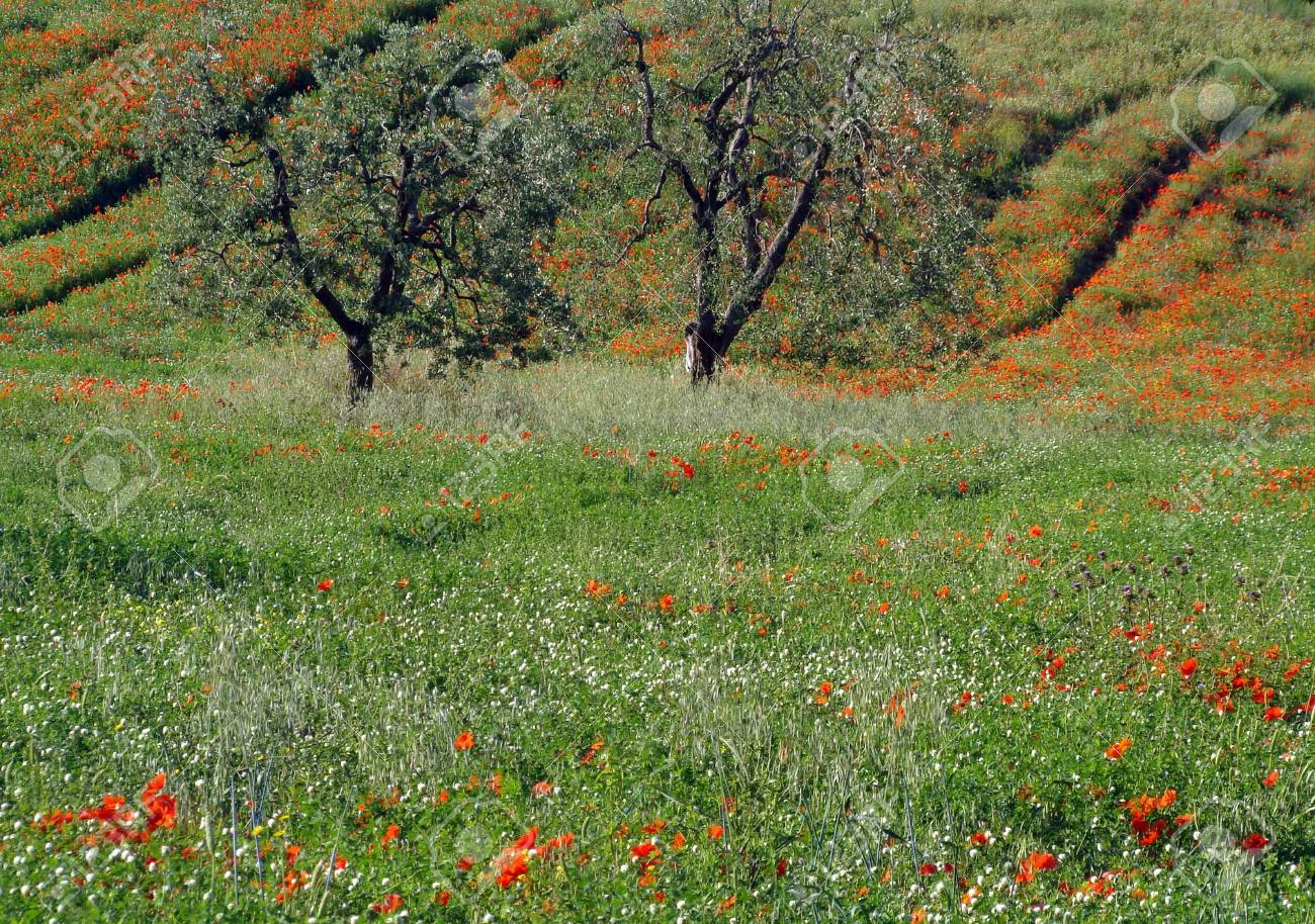 lovely tuscan spring, Orcia Valley, Unesco list  , Italy Stock Photo - 5767754