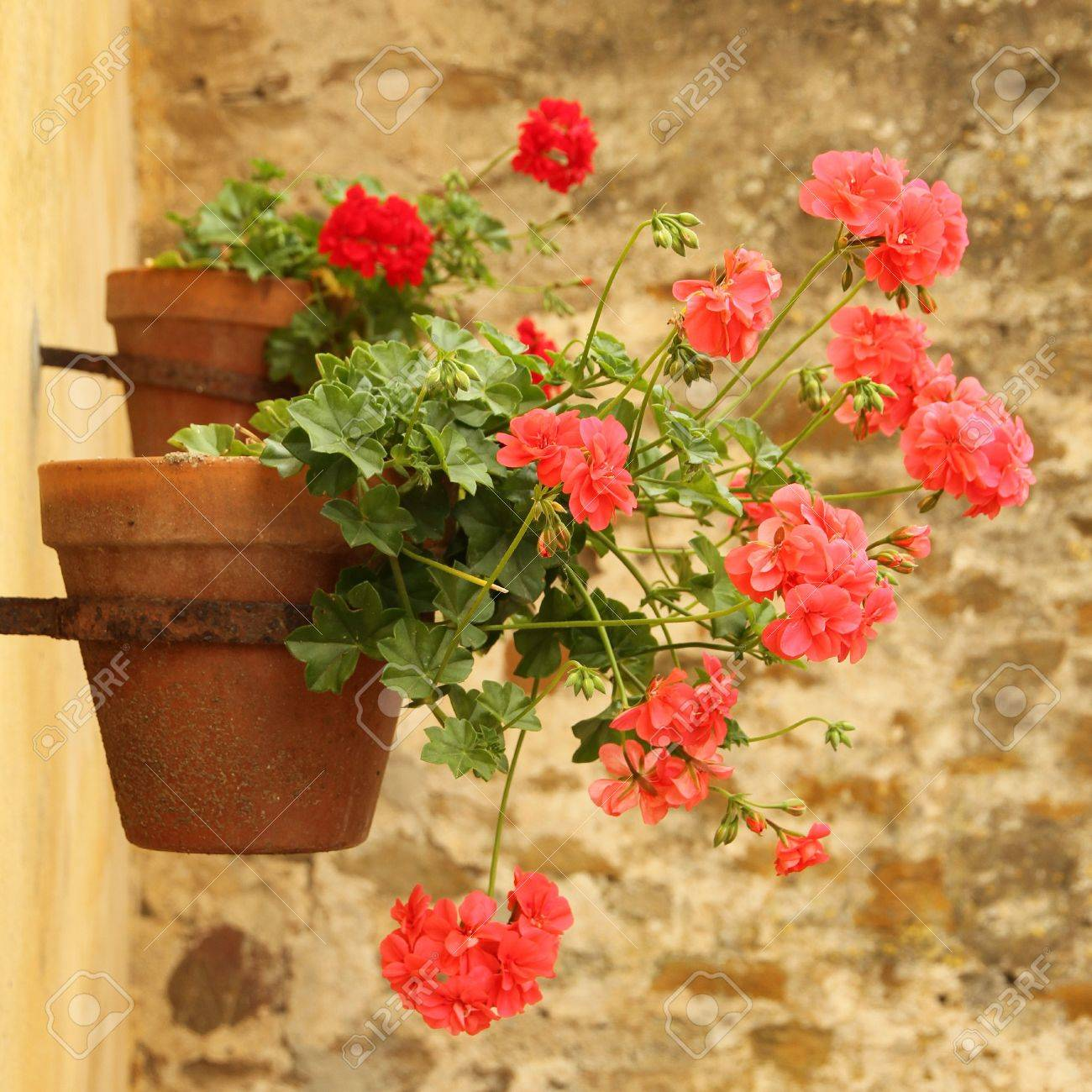 sweet flowerpot Stock Photo - 7589510