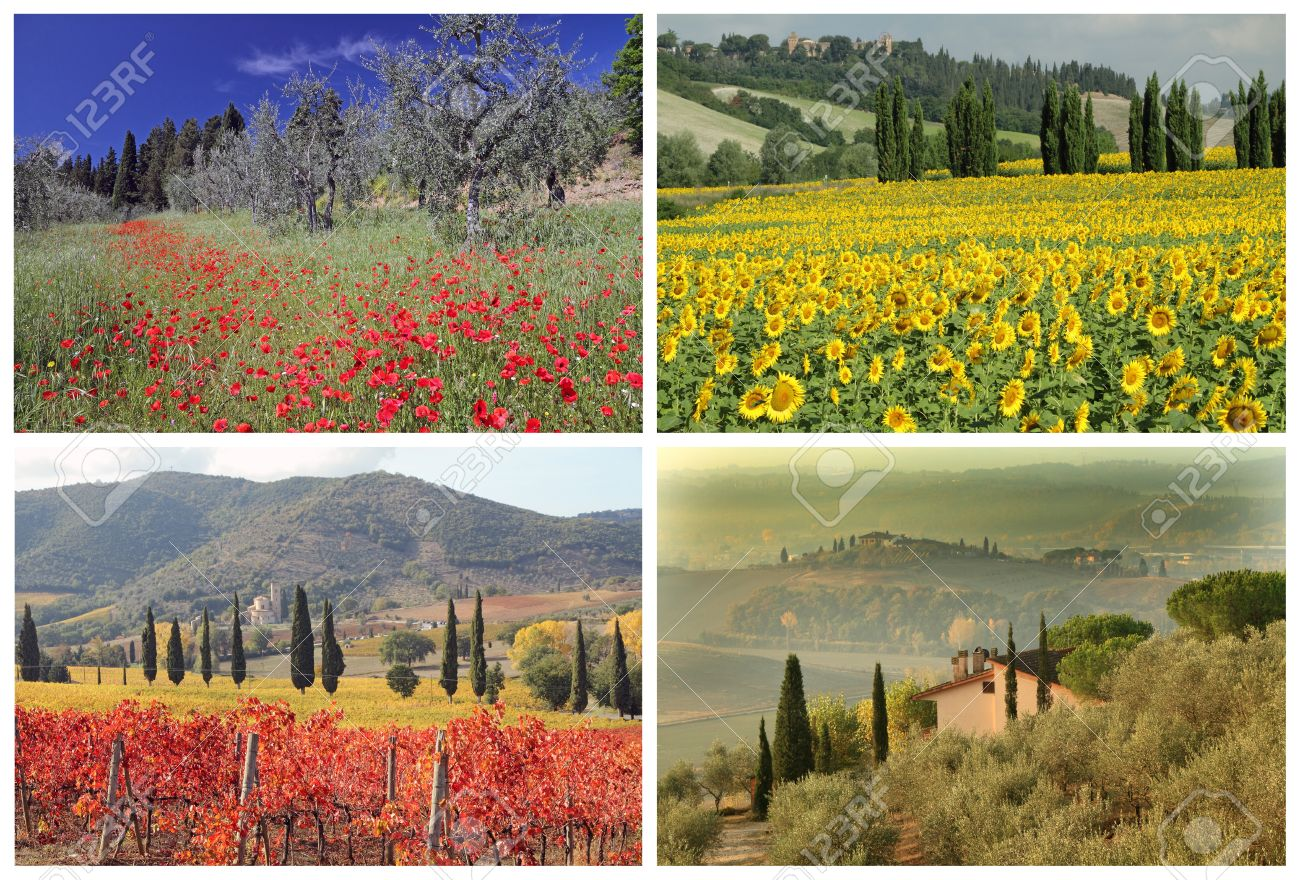 four seasons collage with spectacular tuscan landscape images, Italy,  Europe Stock Photo - 14669550 - Four Seasons Collage With Spectacular Tuscan Landscape Images