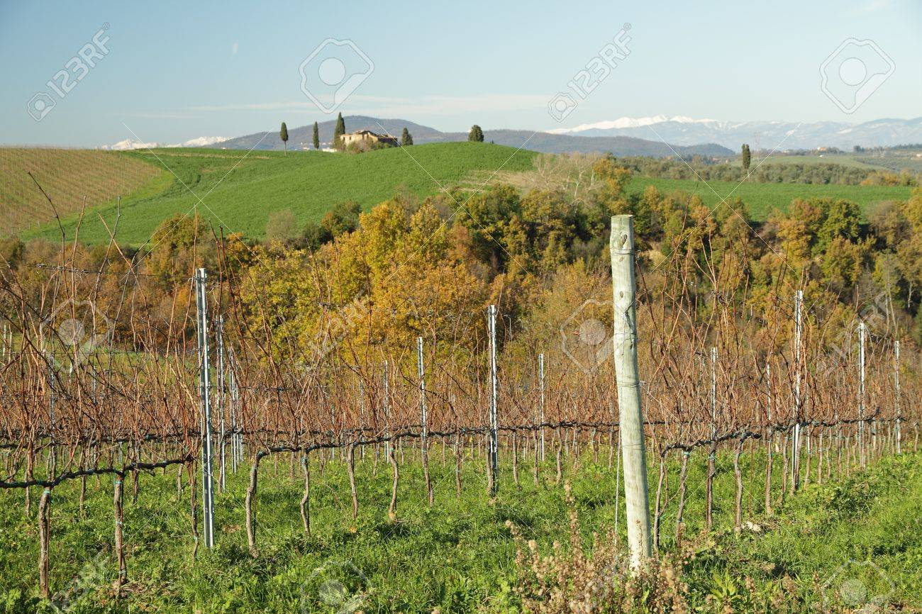 winter vineyards in tuscan landscape, italy, europe stock photo