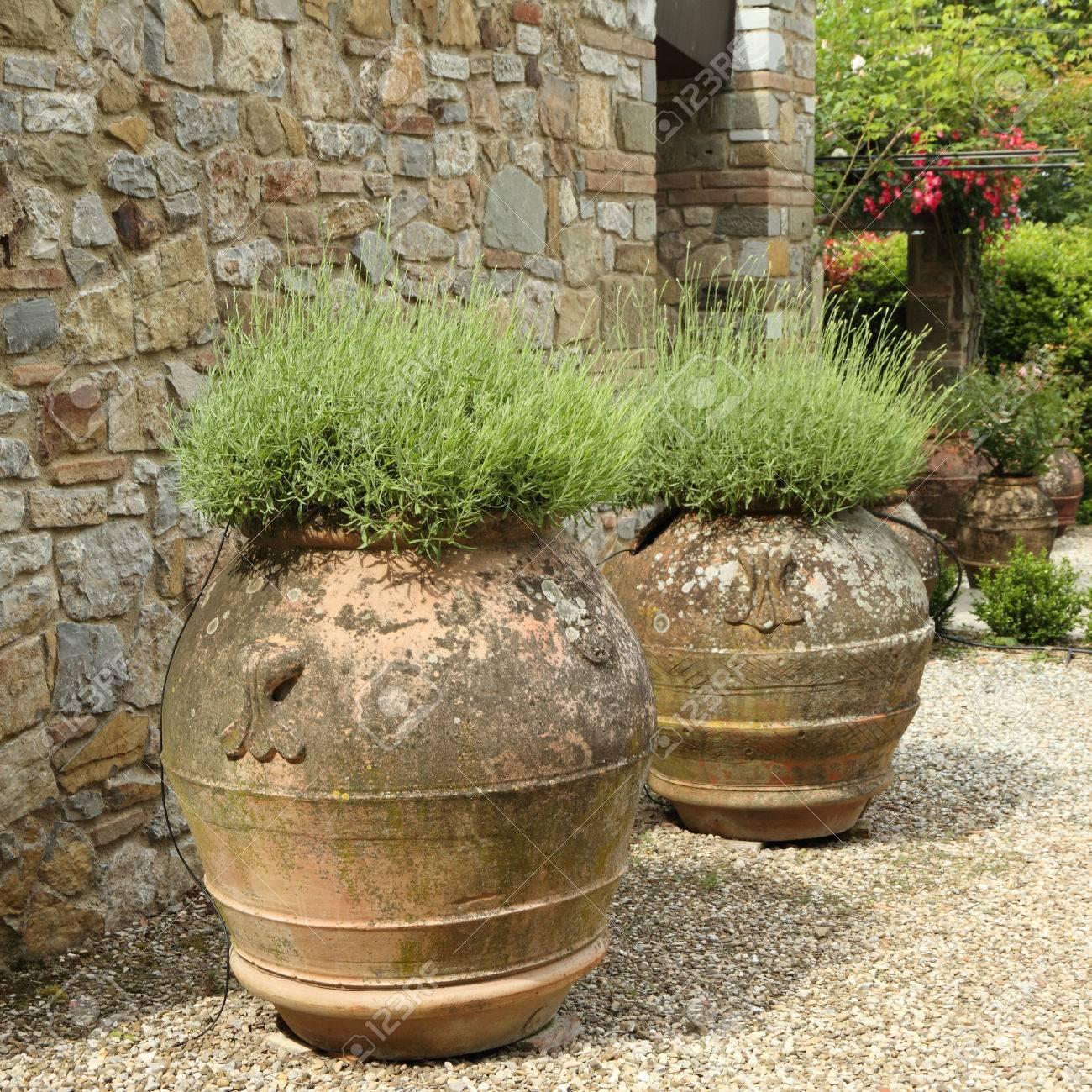 Lavender Plant In Ceramic Vases In Tuscan Garden Stock Photo   24998333