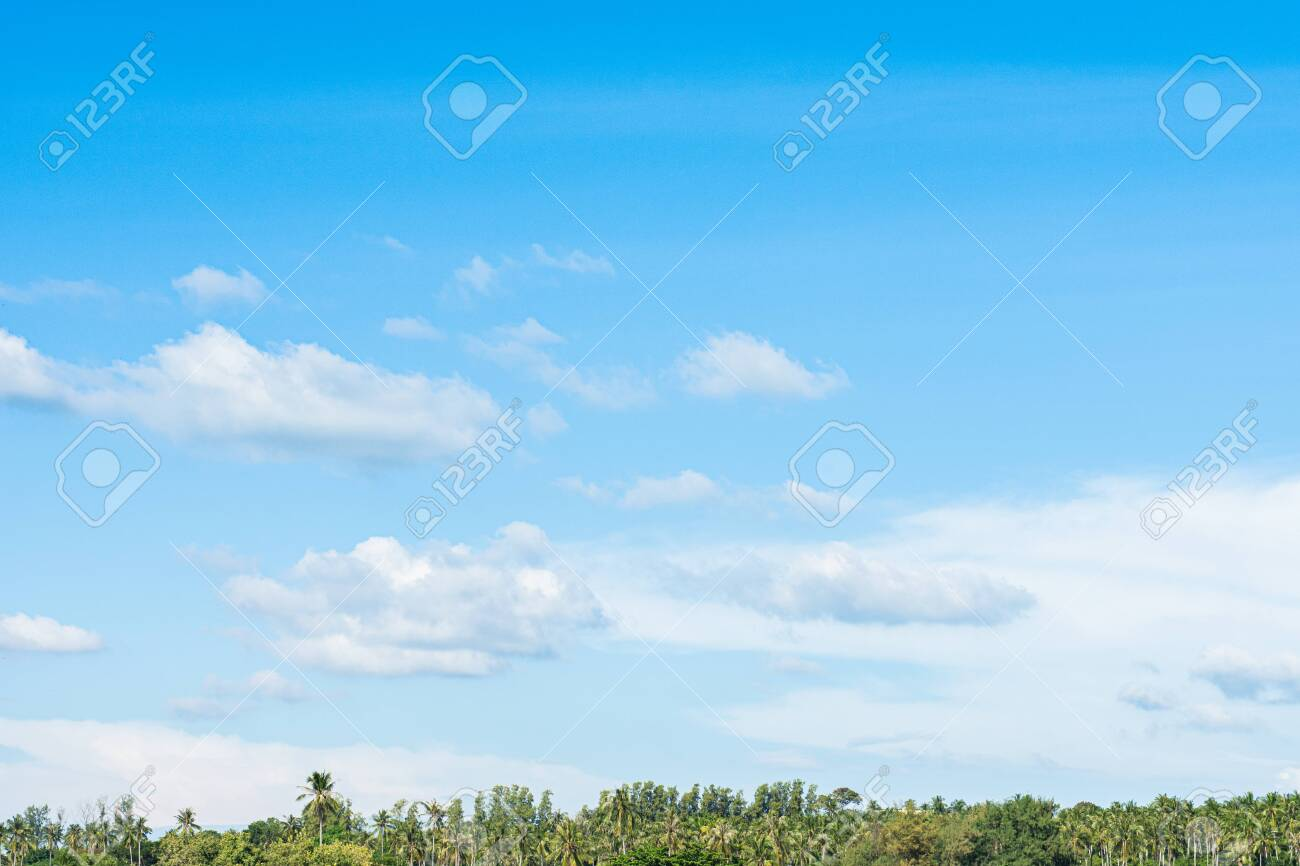 Green coconut palm tree top line over blue sky and clouds background in summer,copy space for backgrounds. - 123738731