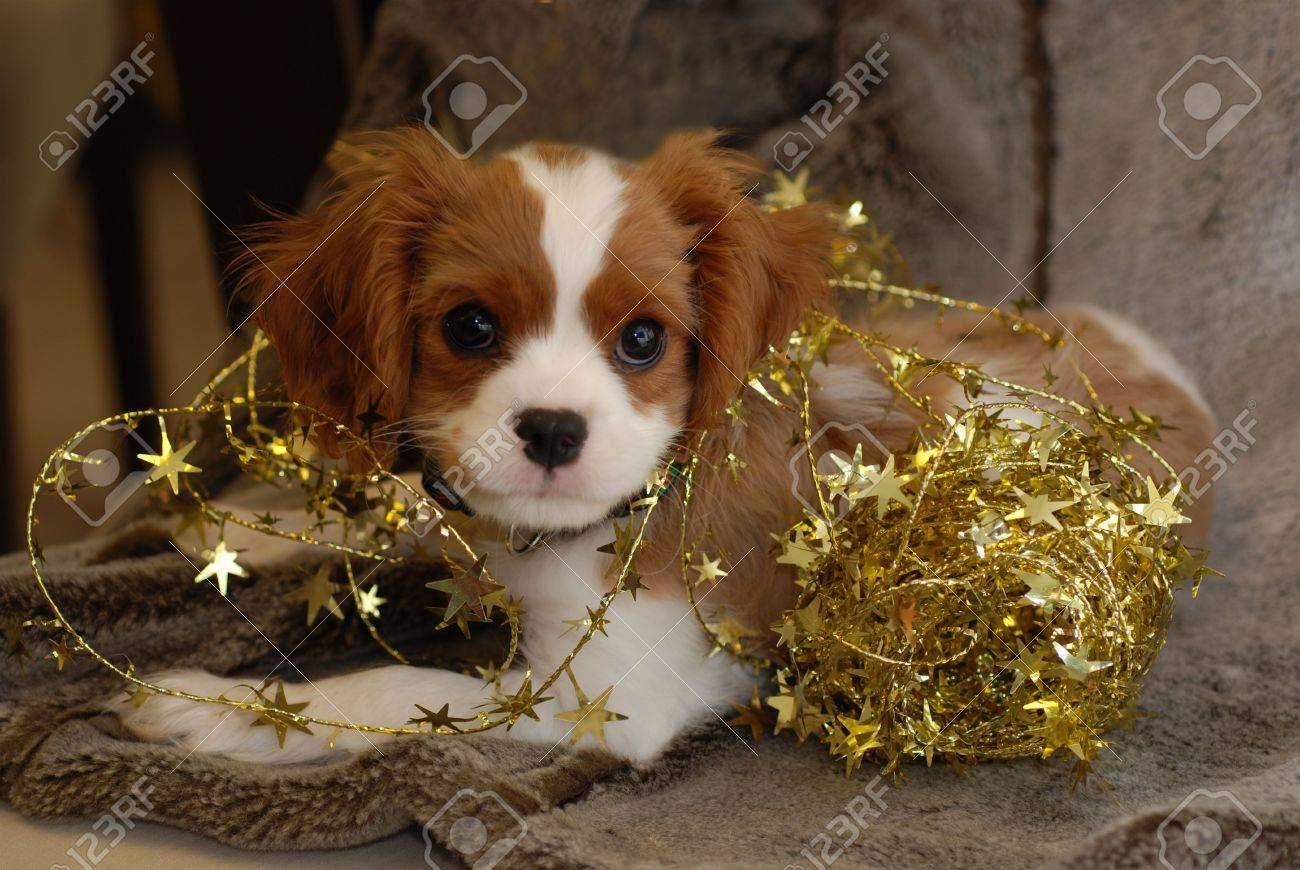 Christmas Puppy tangled in decorations Stock Photo - 644456