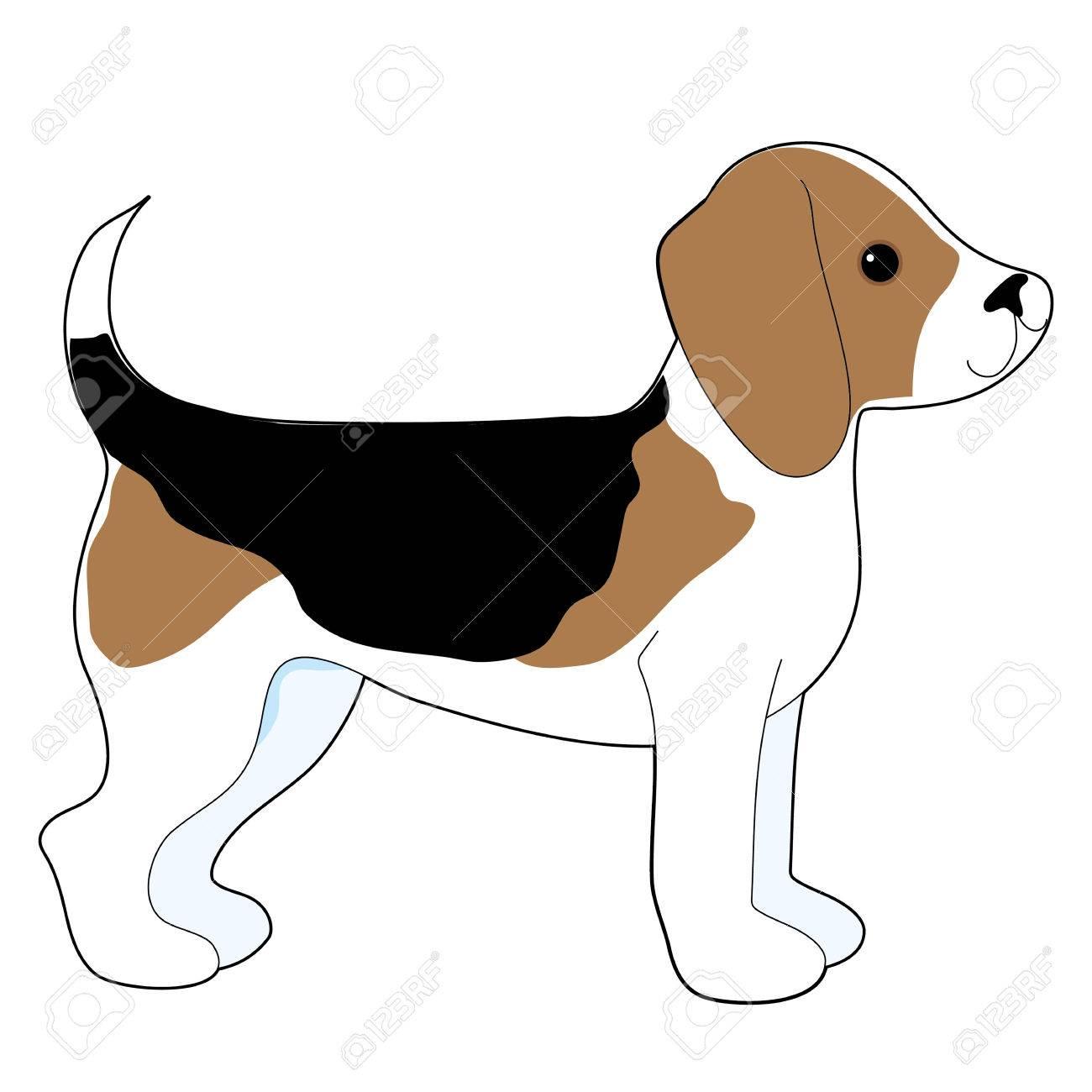 A cartoon drawing of a cute little Beagle puppy - 29538965