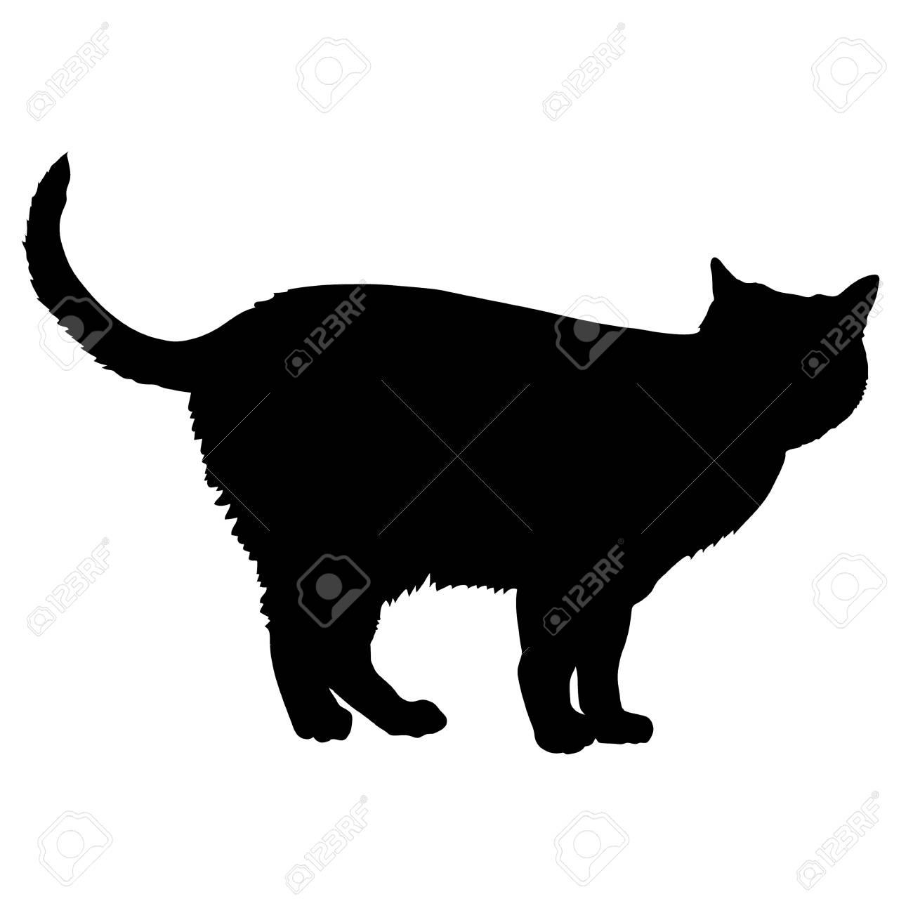 A black silhouette of a cat - 41855412