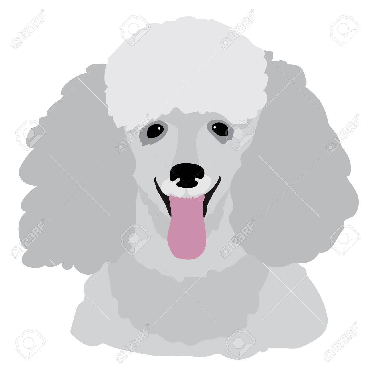 A stylized portrait of a grey toy poodle - 47716043