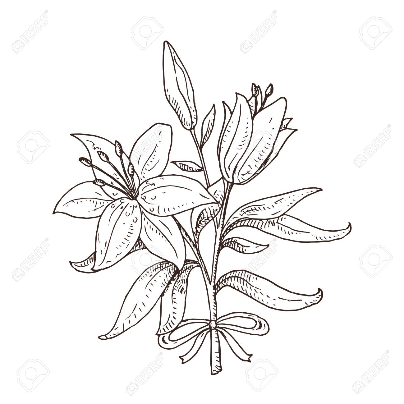 Black And White Hand Drawn Lily Bouquet Beautiful Flowers Spring Royalty Free Cliparts Vectors And Stock Illustration Image 100678841,Personalized Gift Ideas For Girls