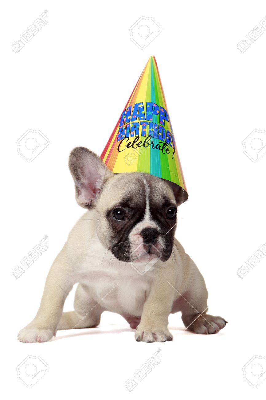 Frenchie Puppy Wearing A Happy Birthday Party Hat Stock Photo