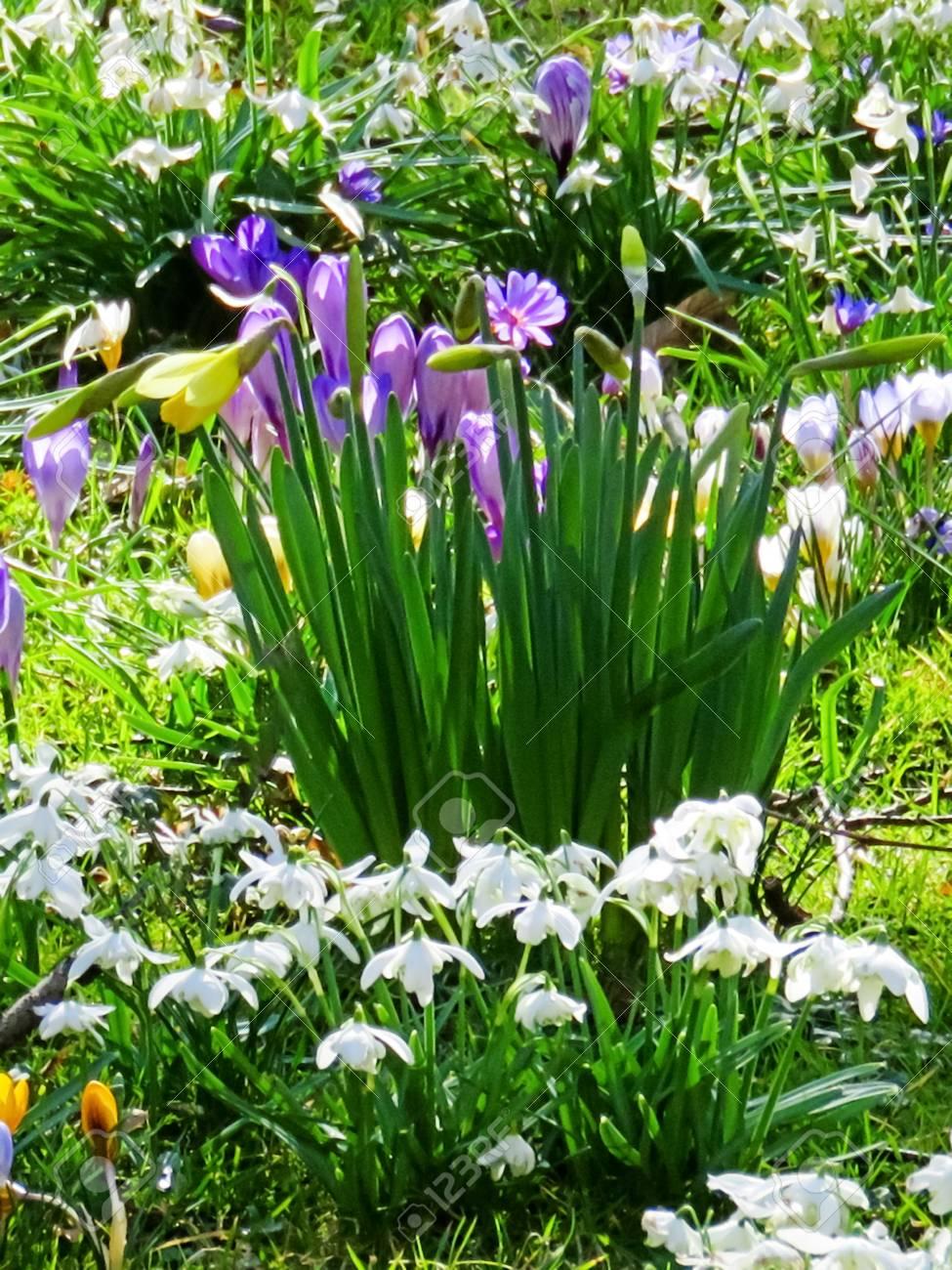 Frühlings Blumen Garten Anzeige Lizenzfreie Fotos Bilder Und Stock