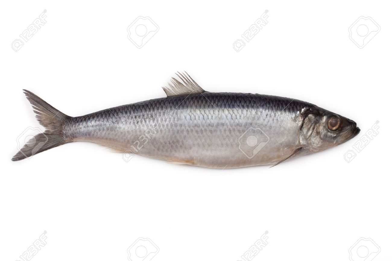 Salted herring fish isolated on white background Stock Photo - 9214165