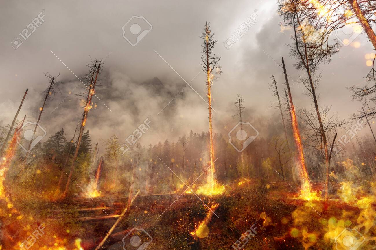 Forest fire - fire - natural disaster - 131953659