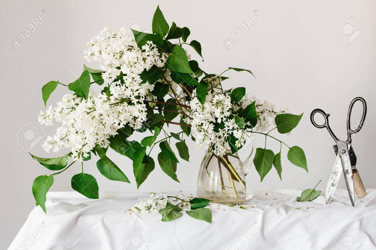 white lilac flowers in a glass pitcher stock photo picture and