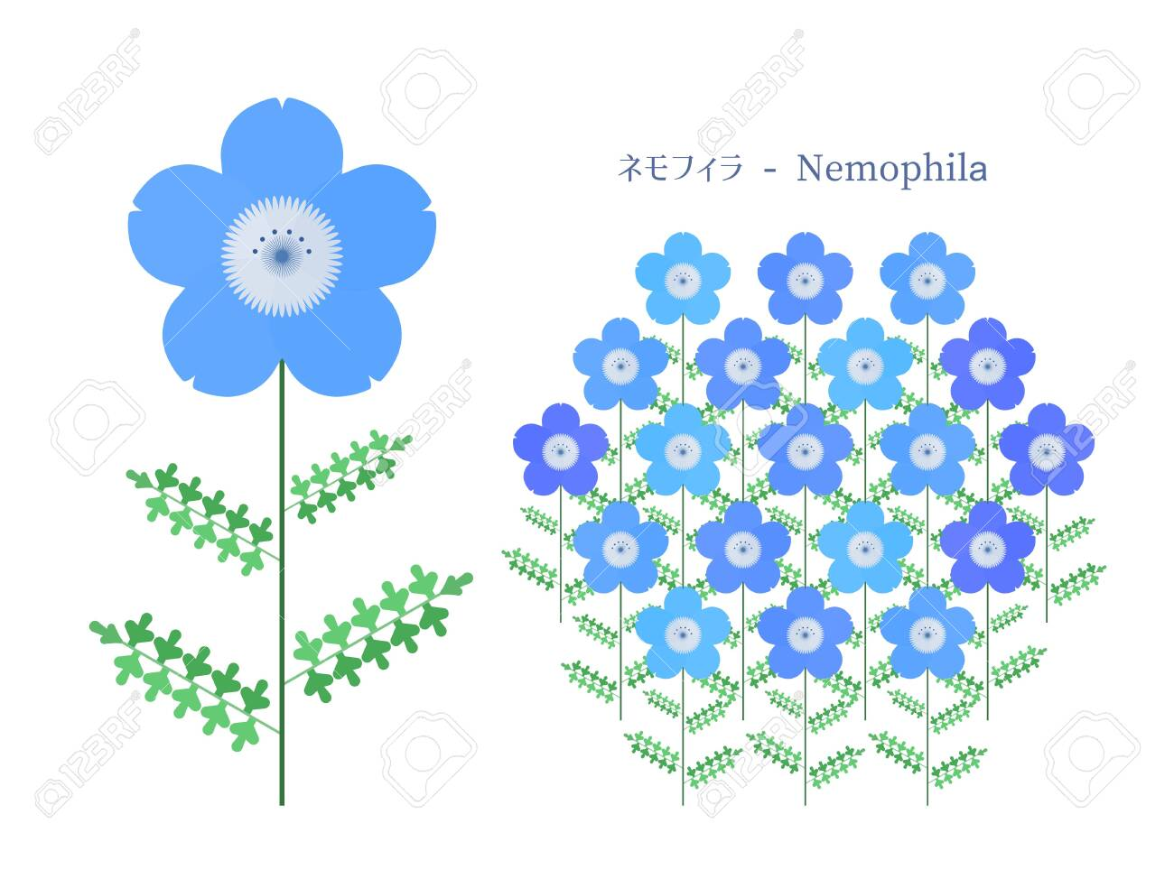 Simple illustration of Nemophila - 140797387