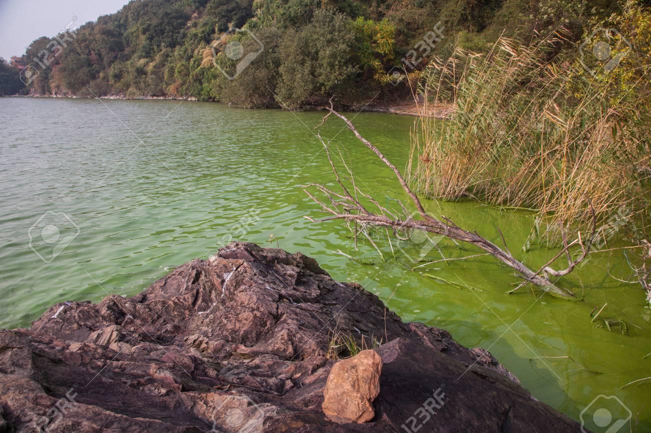 China's Taihu Lake Cyanobacteria - 54671675