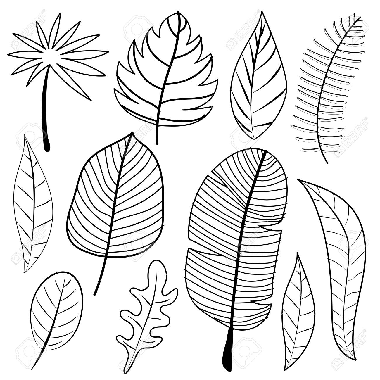 Leaves Doodle Vector Set Royalty Free Cliparts Vectors And Stock Illustration Image 104357702