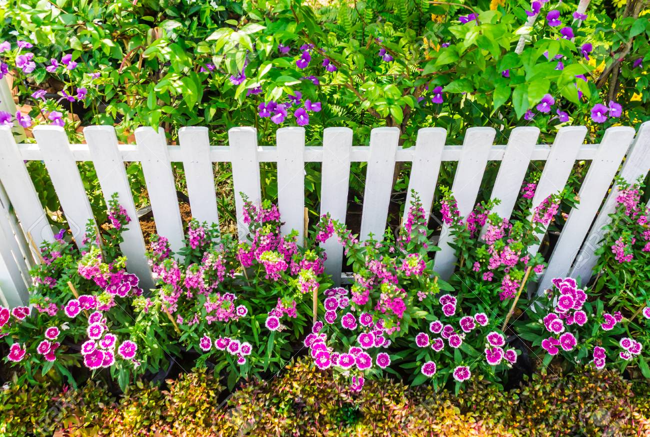 white picket fence surrounded by flowers in front garden on..