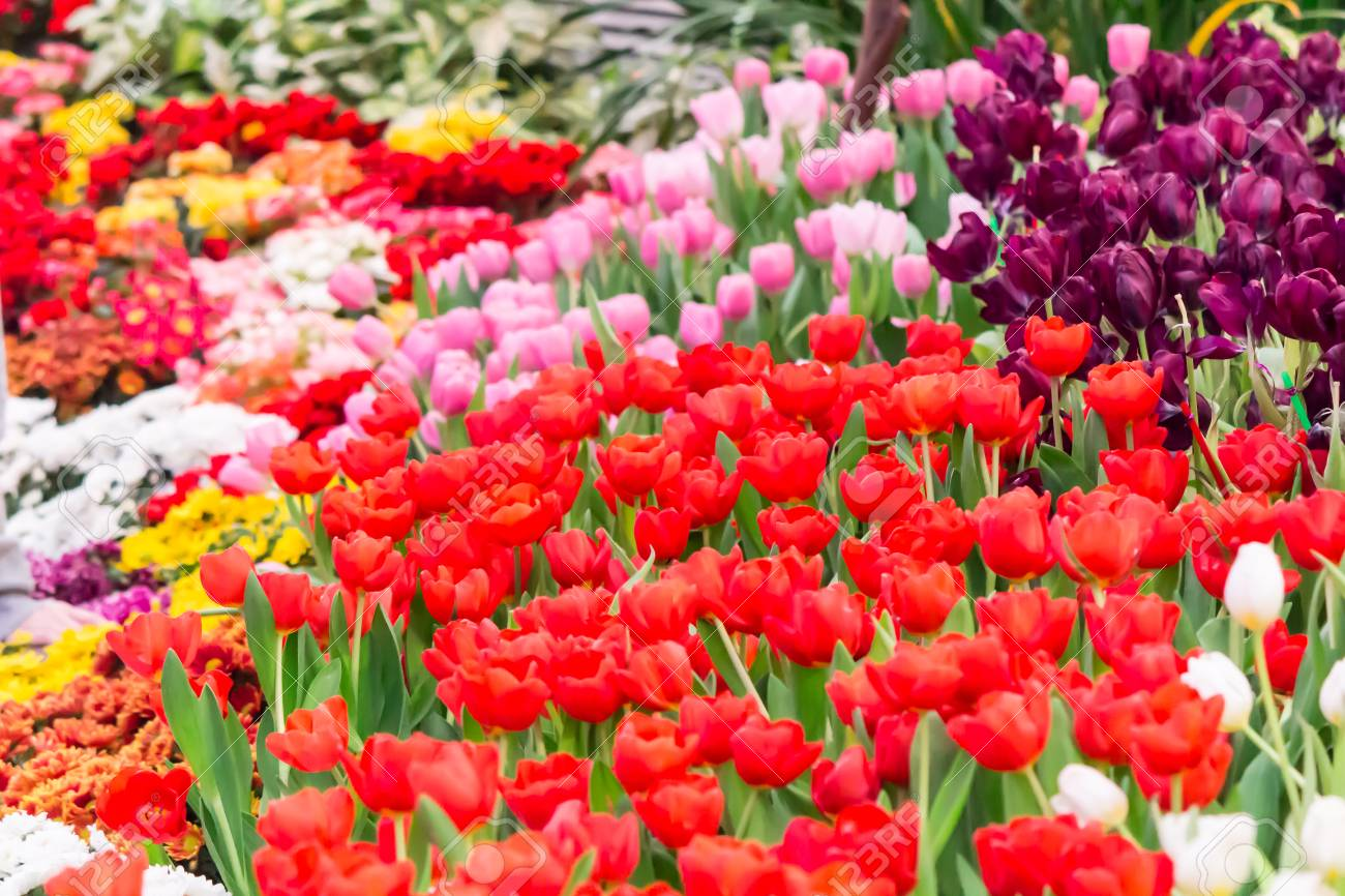 Variety Of Spring Flowers And Tulips Blooming In Beautiful Cozy