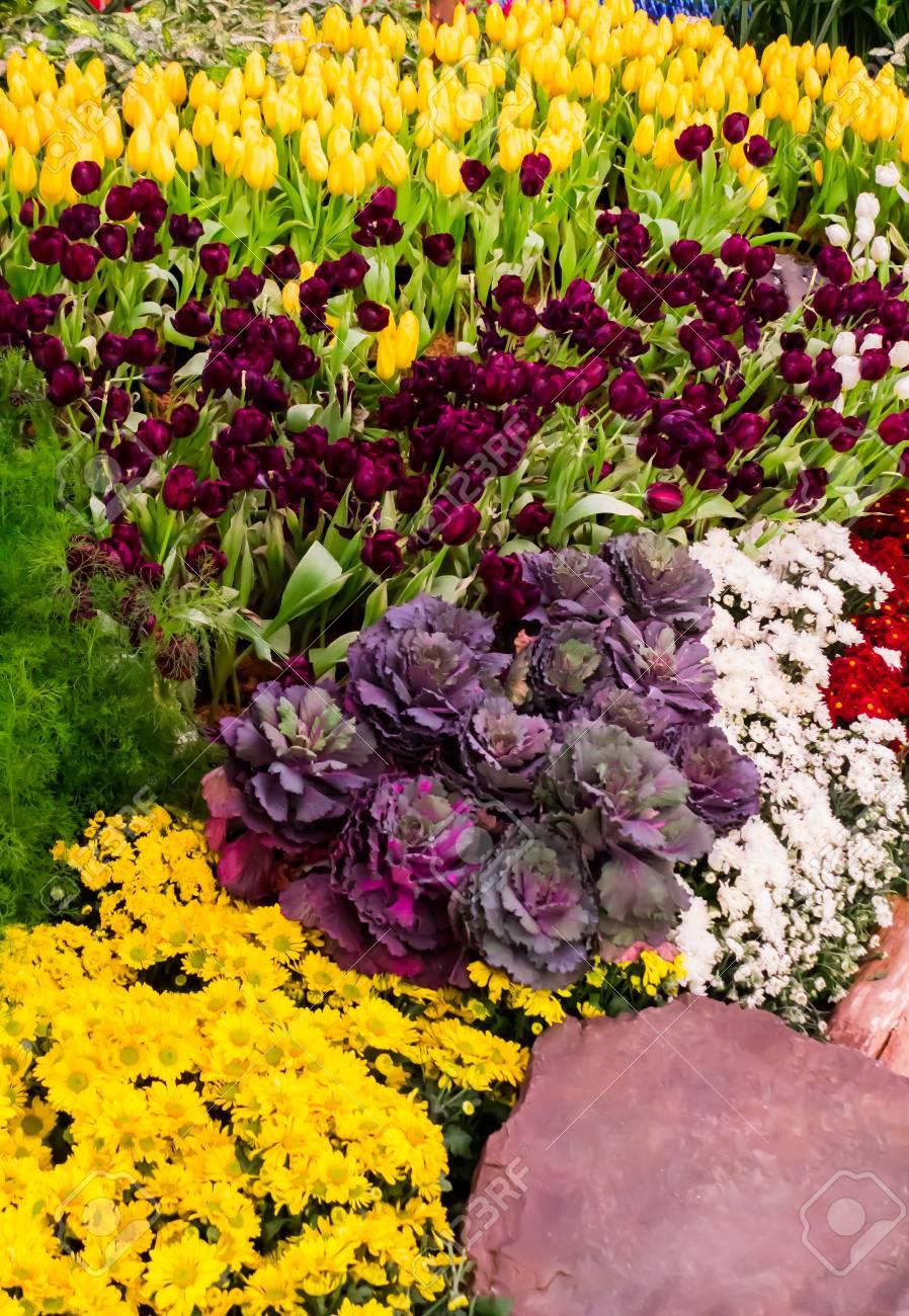 Variété de fleurs de printemps et tulipes fleurissent dans un beau jardin  confortable sur l & # 39 ; été