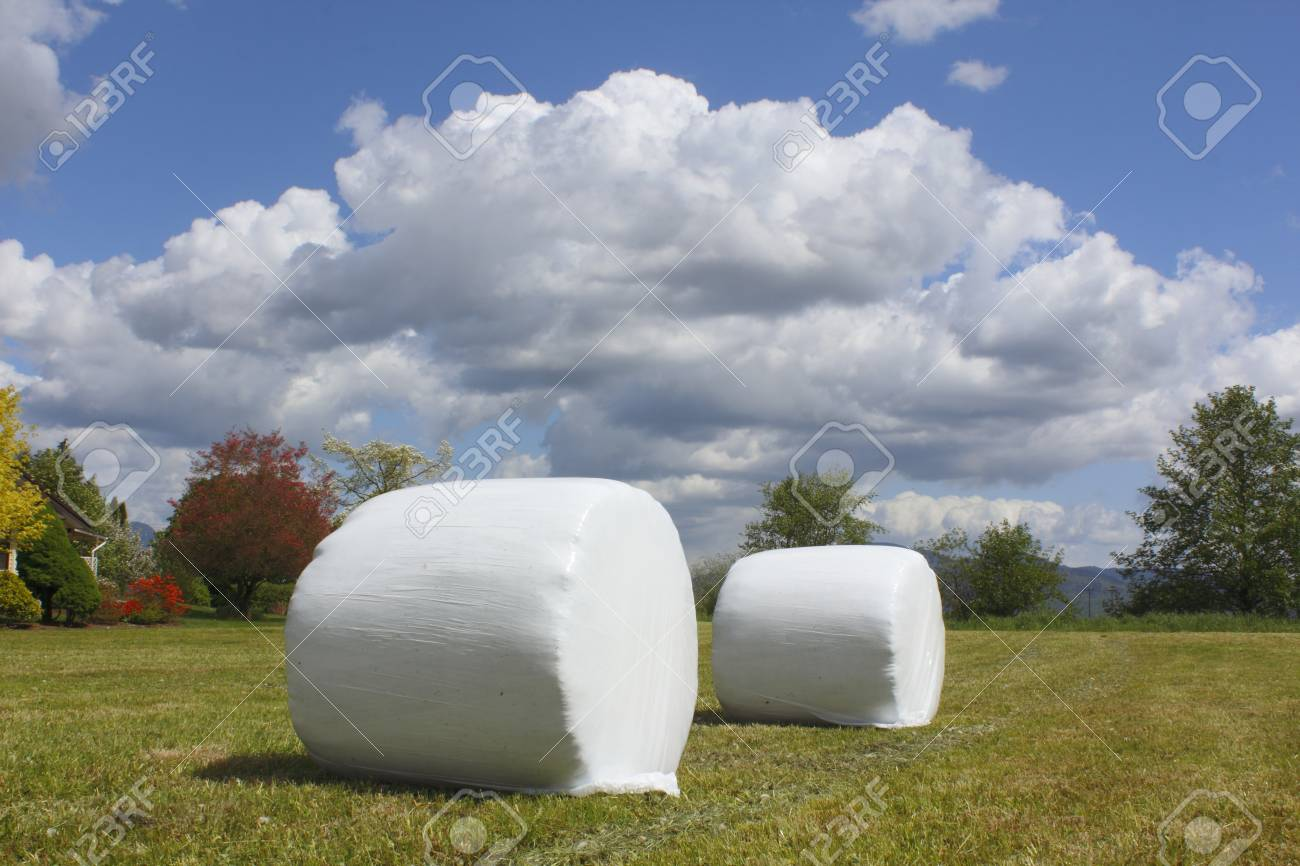 Wrapped Hay Bails Stock Photo - 13540024