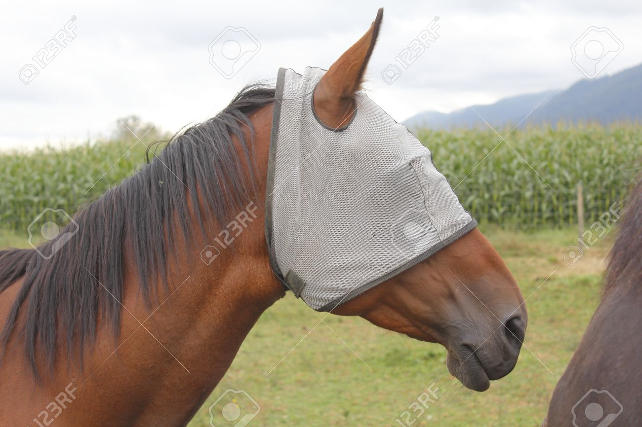 Image result for picture of a horse with blinders on