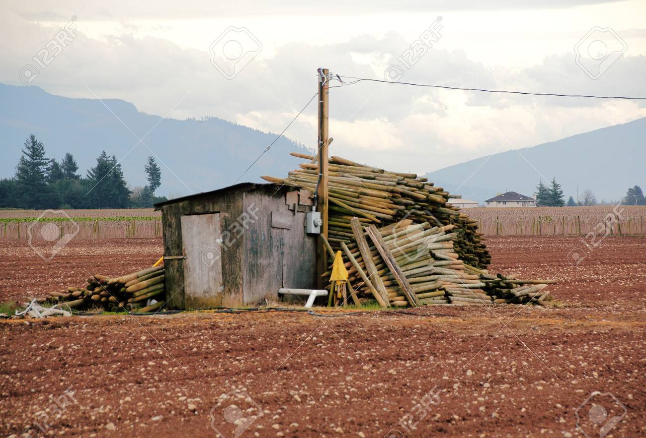 Charming An Old Storage Shack Is A Convenient Support For Stacking Posts Used For  Setting Up Blueberry