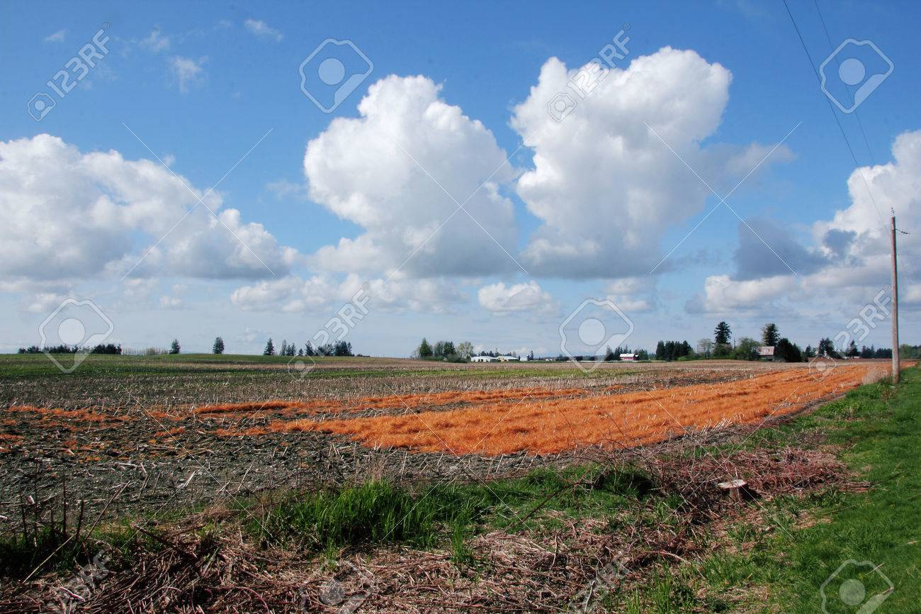 Wide angle view of rural agricultural land in Washington State