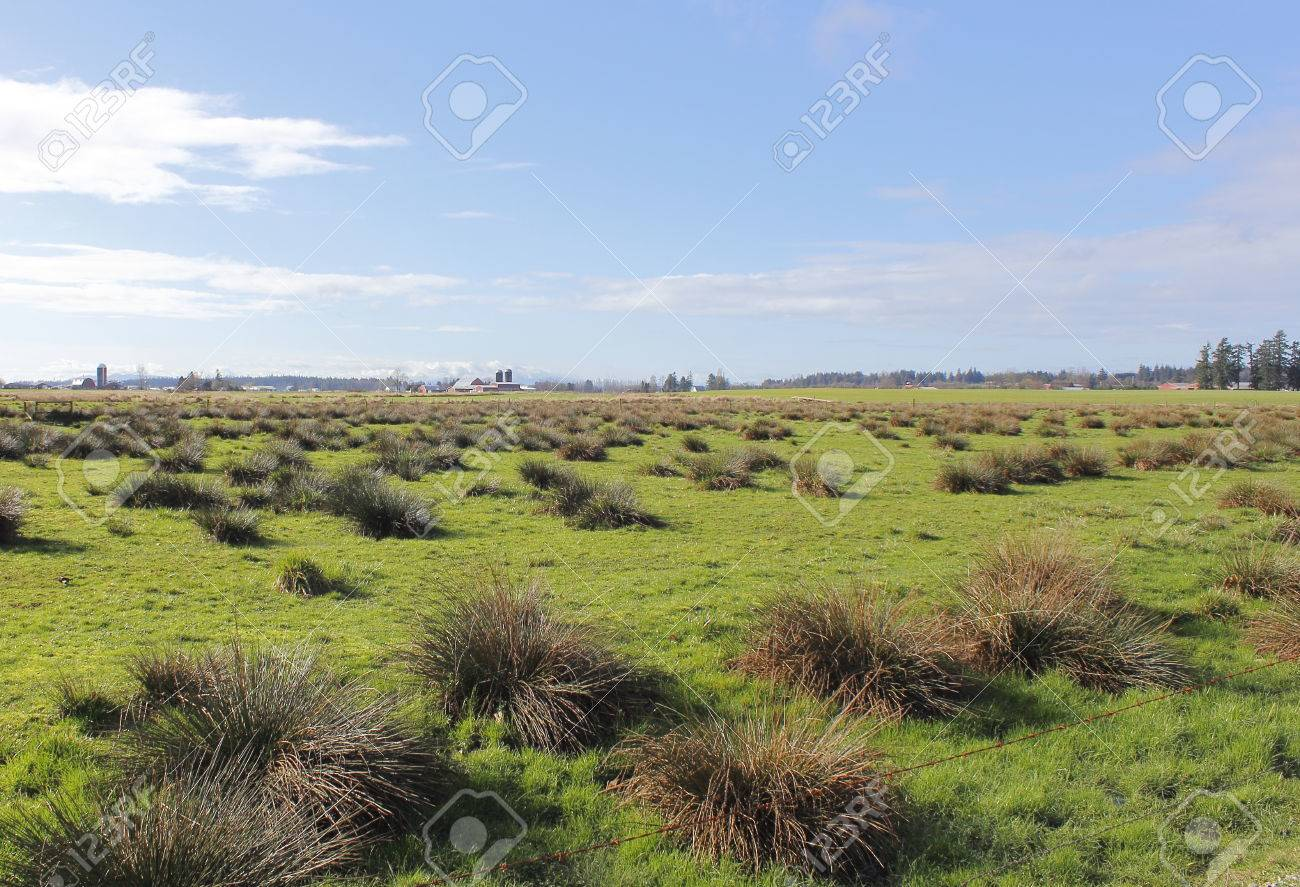 Scrub and grazing land comprise the landscape found in western