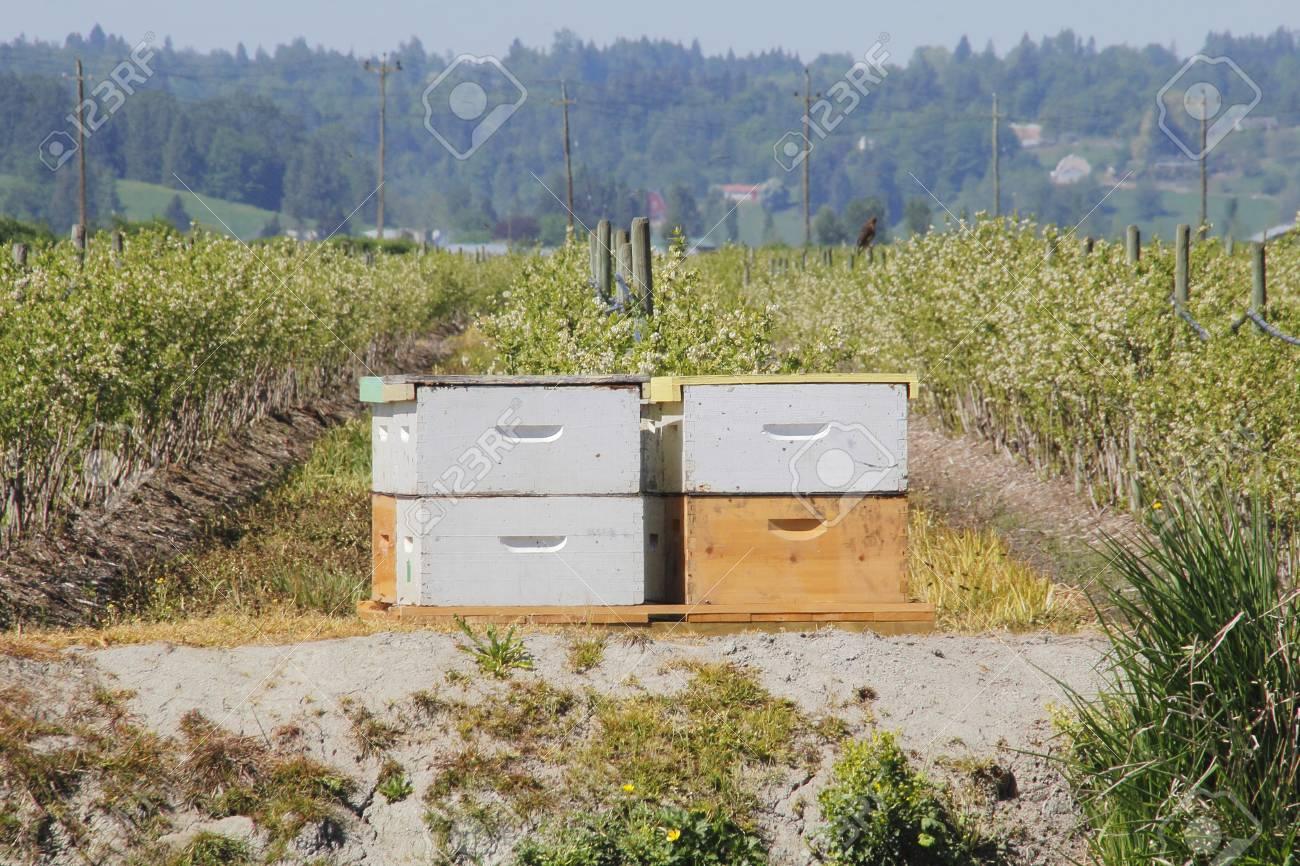Un Agricultor Ha Alquilado Cajas De Abejas Que Se Utilizarn Para