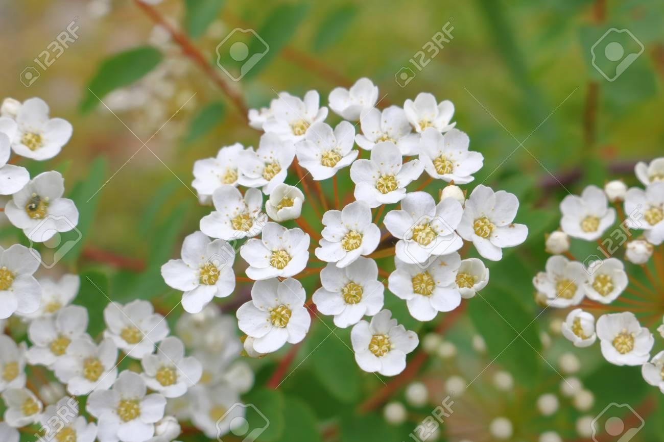 Pequenas Y Delicadas Flores Silvestres Blancas Al Aire Libre Fotos