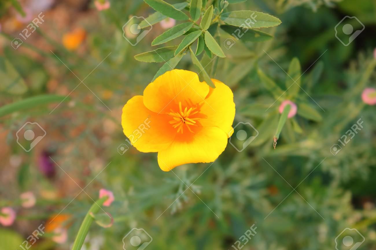 Una Vista Aerea De Una Flor Silvestre Amarilla Pequena Y Delicada En