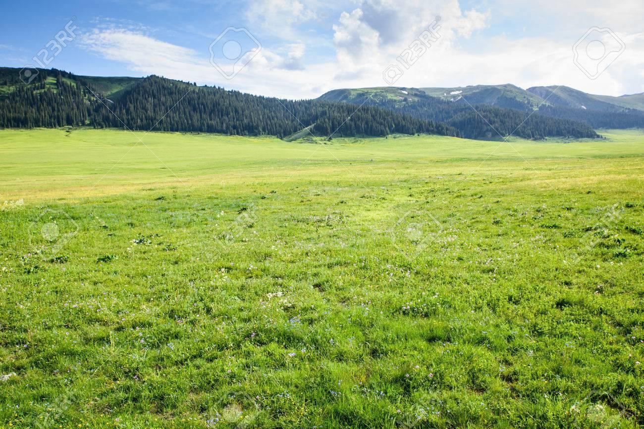 自然草地 ロイヤリティーフリー...