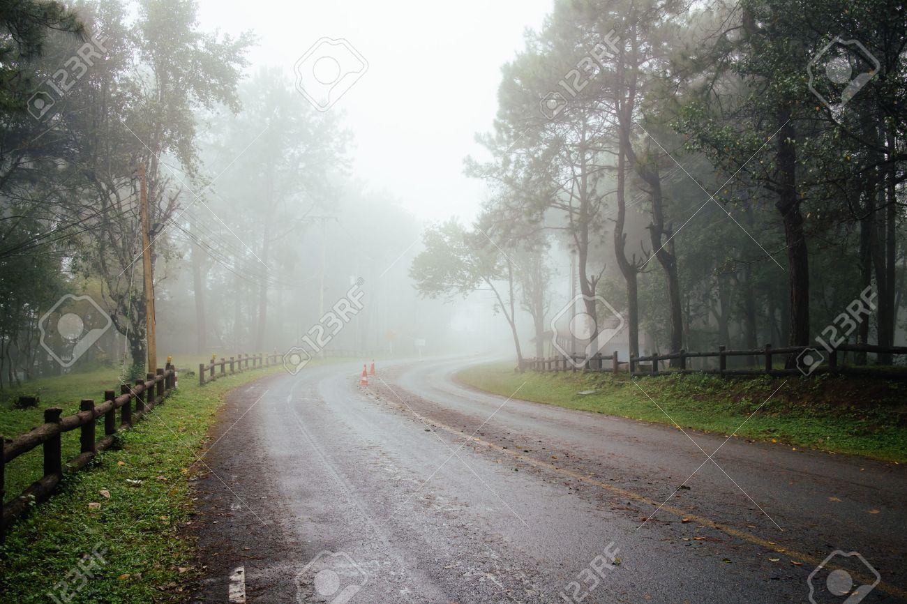 Wallpaper forest, fog, road, trees, fall, rain, autumn, trees, fog ...