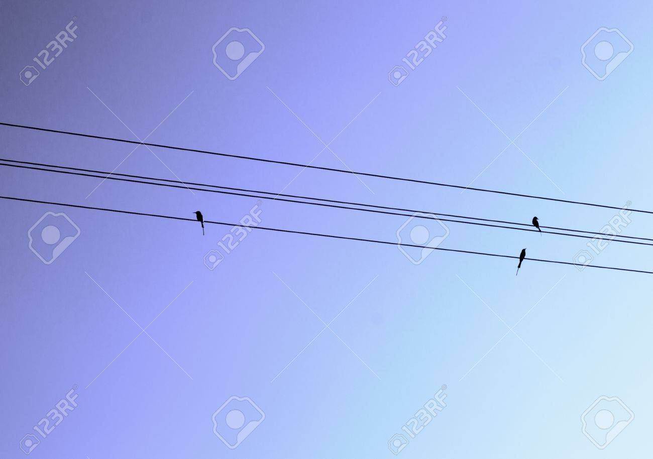 Birds sitting on line Stock Photo - 19182132