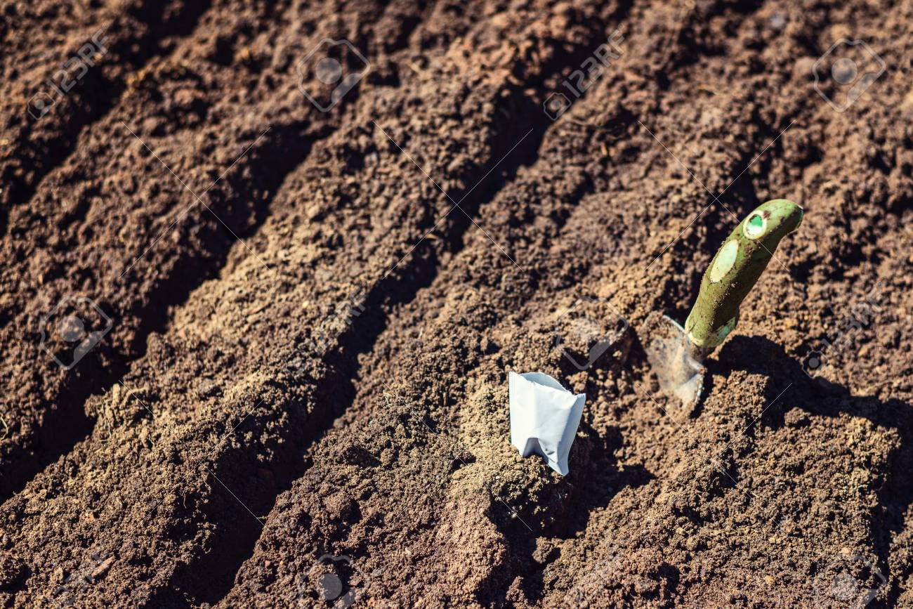 Preparing Garden Bed Soil For Planting Seeds Stock Photo, Picture ...
