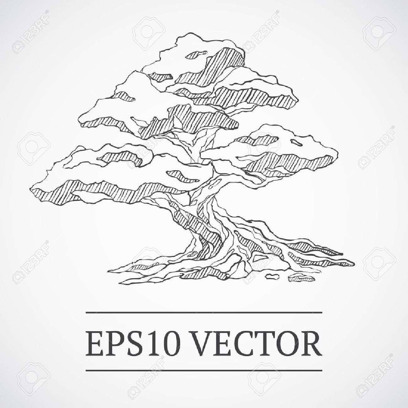 Sketched Bonsai Tree Royalty Free Cliparts Vectors And Stock Illustration Image 13616208